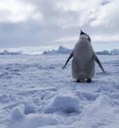 Deal struck for world's biggest marine reserve in Antarctica