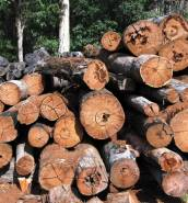 Amazon massacre: global companies accused of importing timber