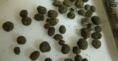 Sicilian gets six years for 2012 cannabis bust