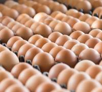 Denmark the latest country to find contaminated eggs