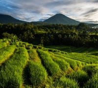Beyond the tourist spots in central Bali | Indonesia