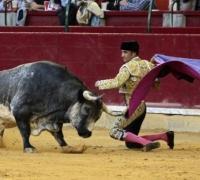 Spain's highest court overturns Catalonia bullfighting ban