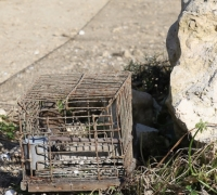 [WATCH] Malta to be reported to EU for 'de facto tolerance' of illegal trapping