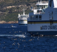 'Unusual' migratory birds observed as BirdLife Malta reiterates claims of 'unsustainable' spring hunting