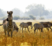 Why a Kenya safari should be your next holiday
