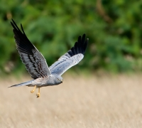 Hunter charged with shooting protected birds