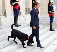 France's President adopts dog and takes him to work