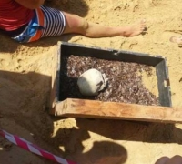 Fake human skull unearthed from Ghajn Tuffieha 'treasure chest'