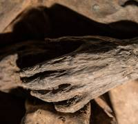 Hundreds of mummified corpses could be uncovered in Swiss Alps meltdown