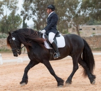 Record number of entries for Maghtab dressage competition