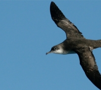 Moqbol valley quarry endangers bird colony