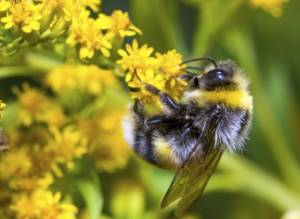 Bee-harming pesticides banned across the EU