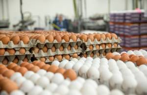 Salmonella found in Gozo market eggs