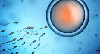 Amendments to IVF legislation yet to be drafted