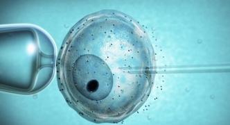 58 babies born through IVF in 2016