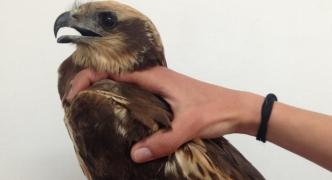 13 protected birds shot down during spring hunting season