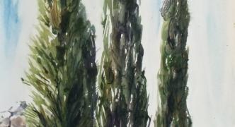 The bark of time | Jo Caruana