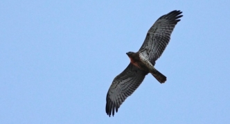 In the Press: Legal notice lowers penalties for offences against protected birds