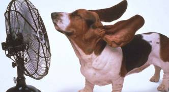 Heatwave leads to hiccup-free record electricity consumption