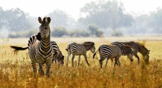 Why a Kenya safari should be your next holiday