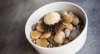[READ] Gourmet Today June edition online