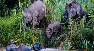 The wildlife of Kinabatangan river | Malaysia