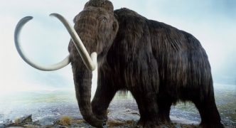 Woolly mammoth will be resurrected within two years, scientists reveal