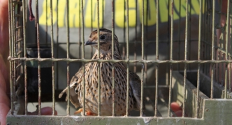 BirdLife Malta flags concerns about hunting controls