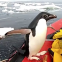 [WATCH] Penguin hitchhikes a ride aboard research boat
