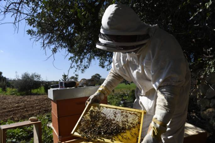 [WATCH] Bulebel Industrial Estate expansion threatens honey production