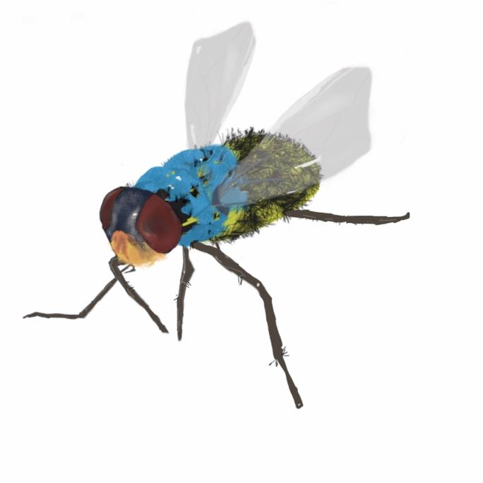 'Fly' by Fabrizio Ellul