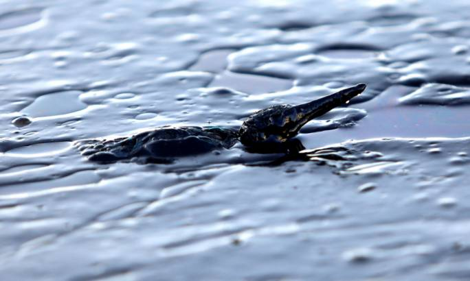A oil-covered bird struggles to stay afloat off Salamína island (Photo: The Guardian)