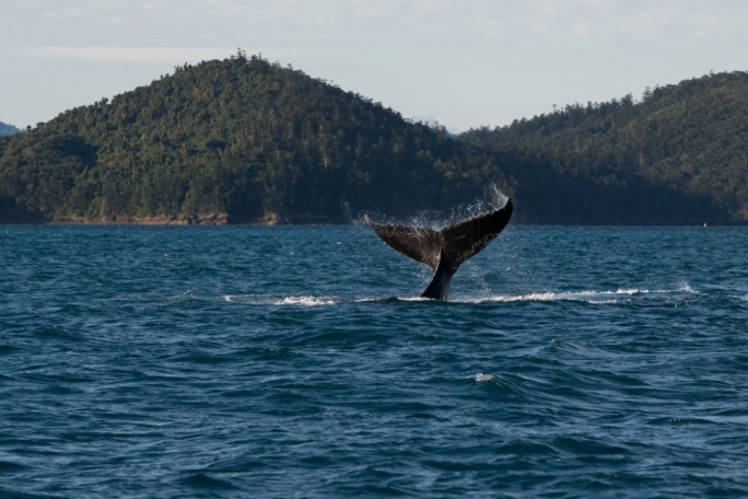 If you're lucky you will even get to see the migrating Humpback or Mink whales