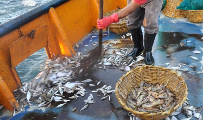 Discards are playing an increasing role in the unreported catches in the last few years, mainly due to the rapid growth in the trawl fishery