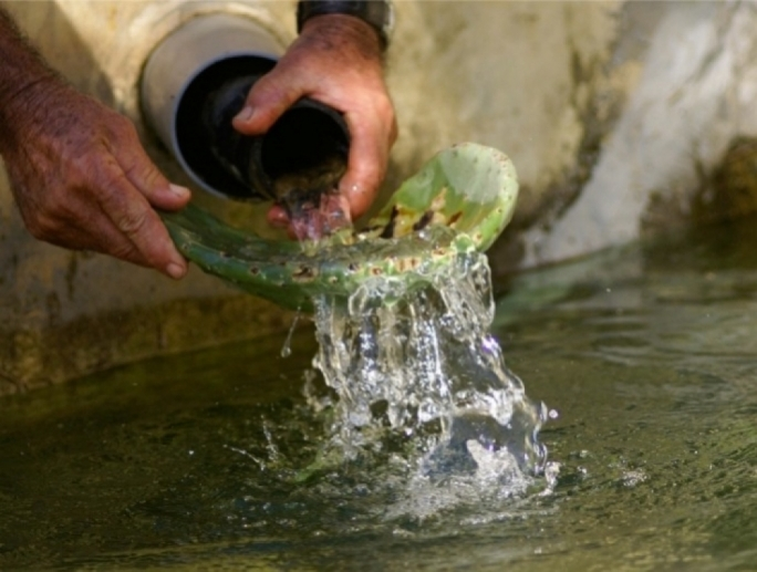 'Closure of boreholes could help solve Malta's agricultaral water problems'