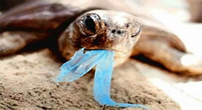 Turtles often confuse clear plastic bags with jellyfish and ingest them, choking to death in the process