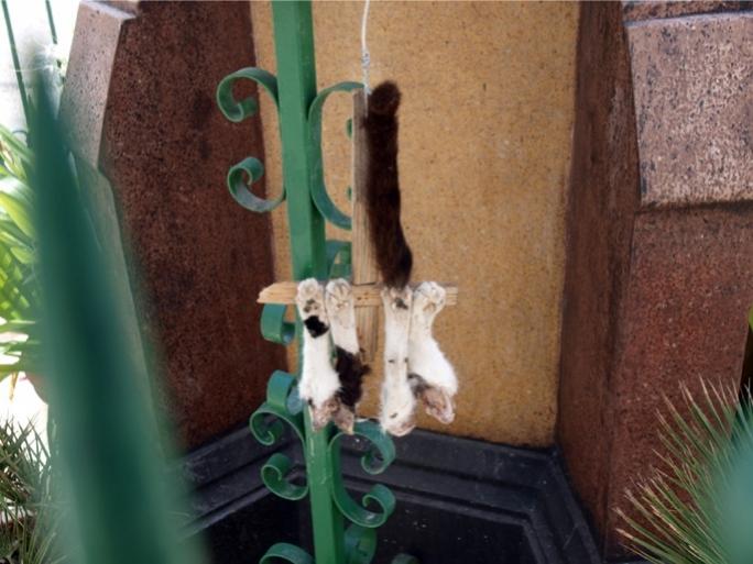 猫譲ってもらって、半年ぐらい経つので。 [無断転載禁止]©2ch.net->画像>89枚