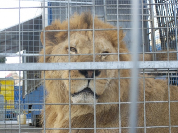 Repeated calls for banning of animal circuses.