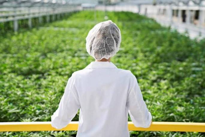 Malta's nascent medical cannabis industry will be located in Hal Far