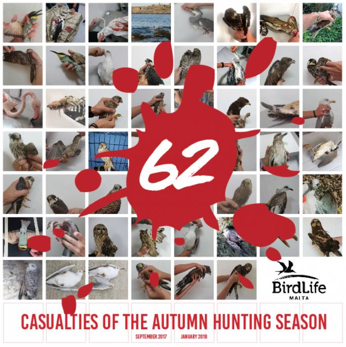 Autumn hunting season closes with 62 illegally shot protected birds