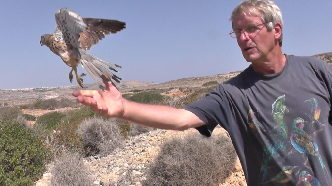 Fly, Baal, fly: the bird was found in Żejtun in July with gunshot injuries that left him grounded with a broken wing