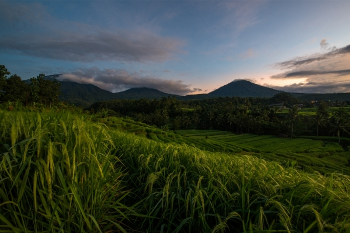 The rice paddies of Central Bali (photo by Marc Casolani)