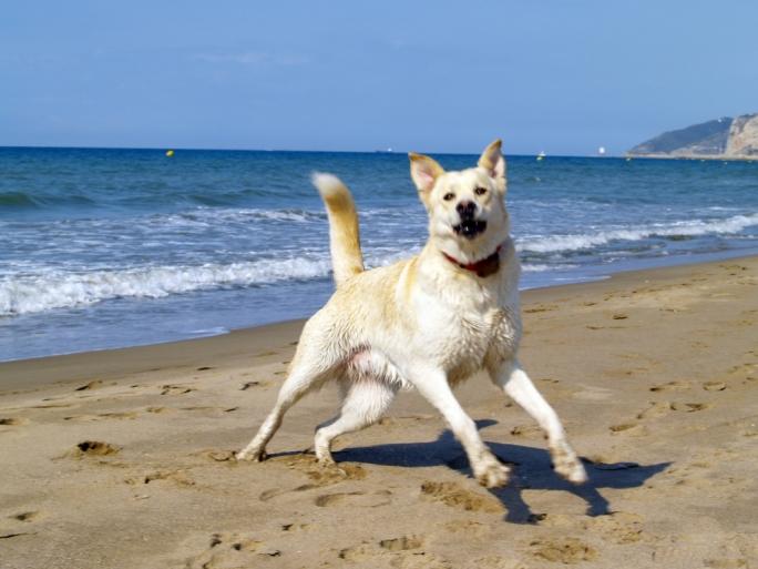 Dog Friendly Beach in Baħar iċ-Ċagħaq has been reopened