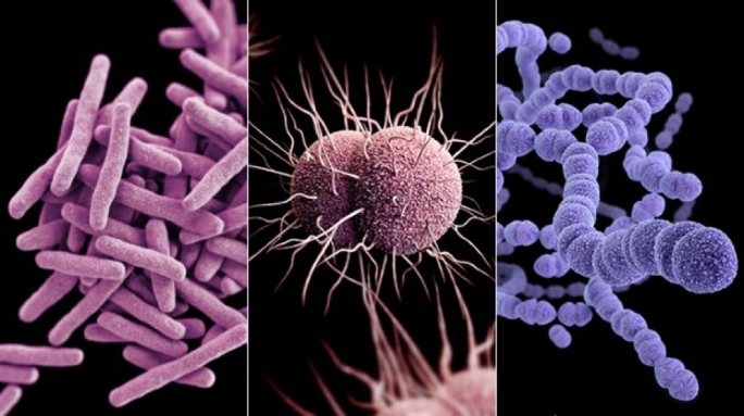 25,000 patients die each year from drug-resistant infections