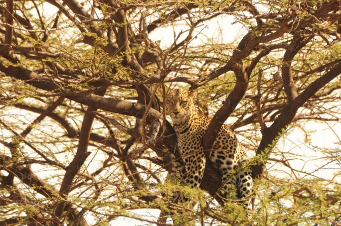 Check out Marc Casolani's article about Samburu National Reserve in Kenya and so much more in the March issue of Vida
