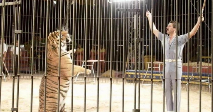 Tigers kill Italian tamer as nation mulls ban on circus animals