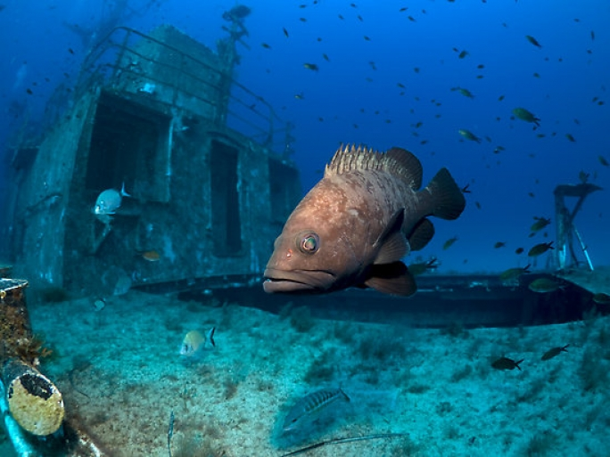 No protection for Grouper four years since action plan