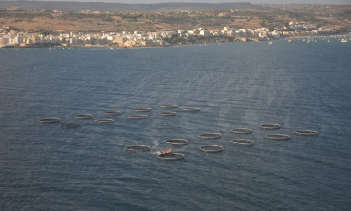 Aerial photos show the slime spreading from fish farms