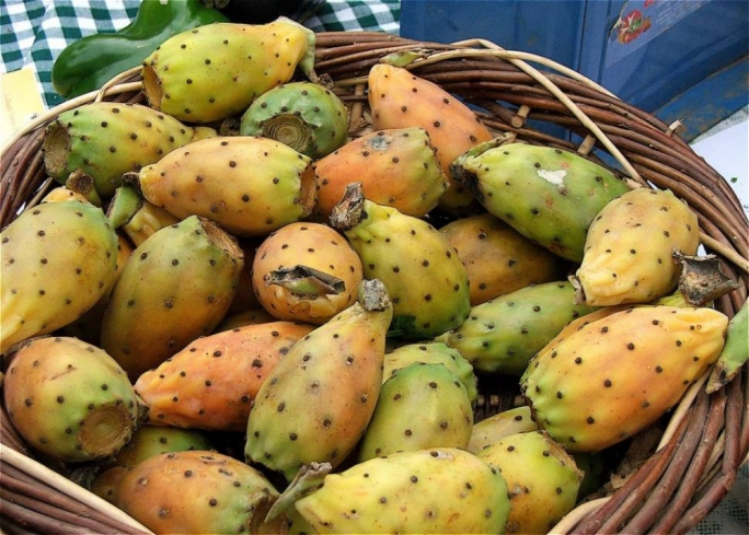 Forgotten miracle crop: little interest in the Maltese prickly pear