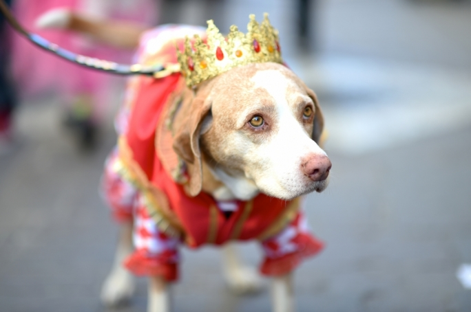 Carnival fever goes to the dogs in Valletta • Photos by Ray Attard